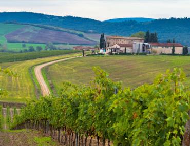 De wijnproducent Natale Verga
