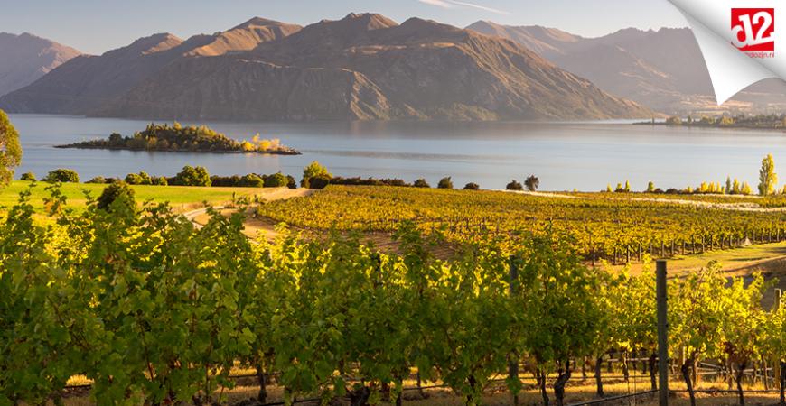 Sauvignon Blanc uit Nieuw-Zeeland
