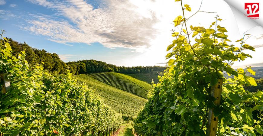 Wijnblog: wat is Cava?