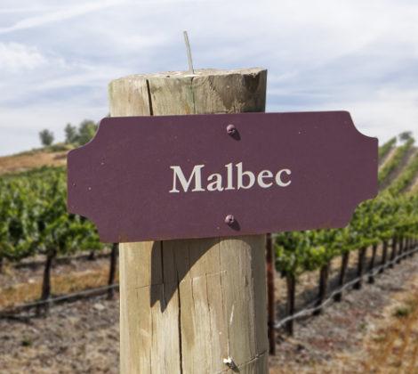 Argentijnse wijn, ontdek de Malbec!