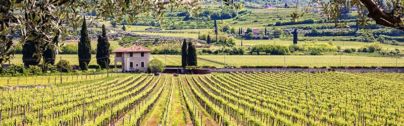 Italiaanse mousserende wijn, heerlijke wijn met verleidelijke bubbeltjes. Je leest alles over de verschillende soorten in ons blog.