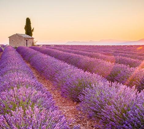Rosé uit Provence: voor de liefhebbers