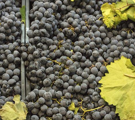 Tempranillo wijn: lees meer over deze wijn