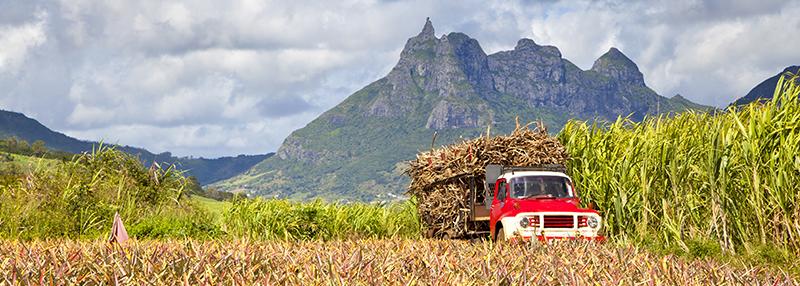 Bijproducten van suikerriet vormen de basis van rum