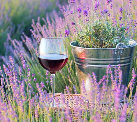 Franse wijnen: puur vakmanschap