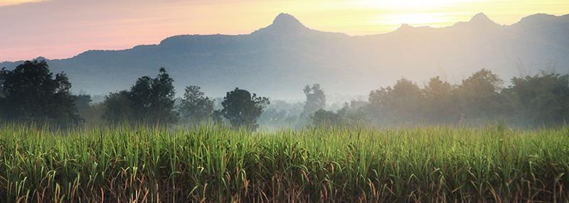 Een bijproduct van suikerriet vormt de basis van rum