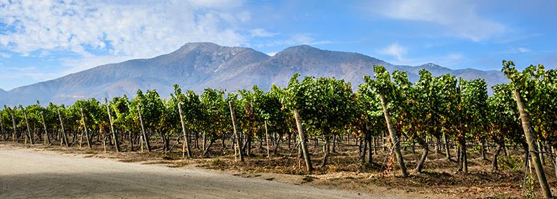 Ontdek een stukje uit de geschiedenis van wijn uit Chili