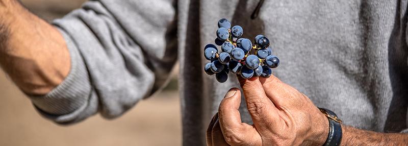 Wijn uit Chili maakt men obv diverse bekende druivenrassen