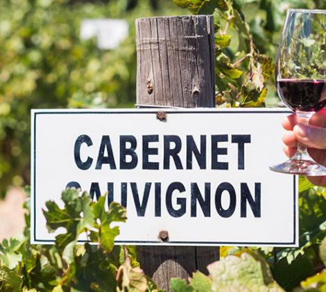 Cabernet Sauvignon: ontdek de druif en de wijn