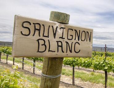 Sauvignon blanc: dit is wat je moet weten