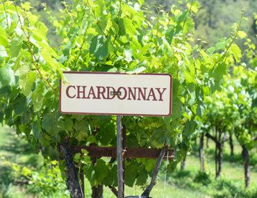 Chardonnay: ontdek de druif en wijn