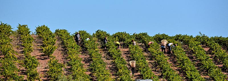 Wijngaarden Dom Brial